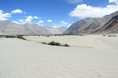 Nubra Valley(Ladakh). Stock Photography