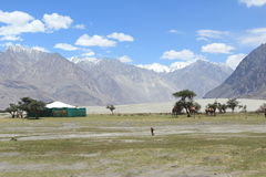 Nubra Valley In Ladakh. Stock Images