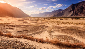 Nubra Valley sand dunes Royalty Free Stock Image