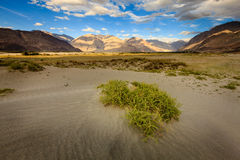 Nubra Valley Royalty Free Stock Images
