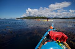 Kayakers enjoy calm conditions among the reefs and kelp on the west coast of Vancouver Island stock images