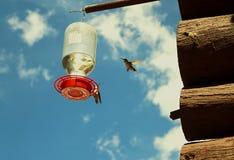 Nucić ptaka fotografia royalty free