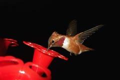Nucić ptaka w locie obrazy royalty free