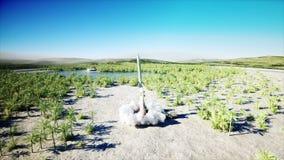 Nuclear ballistic rocket, complex. Launch rocket, dust. Realistic 4k animation.