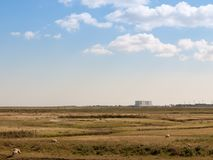 Nuclear power plant at bradwell on sea in distance over land wit. H sheep up front landscape; essex; england; UK Royalty Free Stock Images