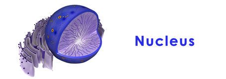 nucleus ilustracja wektor