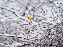 Nude branches in the snow Royalty Free Stock Photography