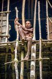 Nude Papuan tribe Korowai posing on the stairs leading to the house on a tree. Royalty Free Stock Photos