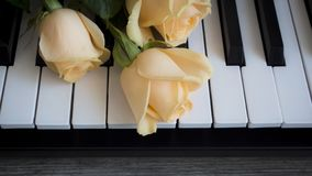 Nude roses on black and white piano keys, international womens day, mothers day, romance, love, flowers stock image