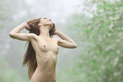 Nude sexy girl in a meadow Royalty Free Stock Image