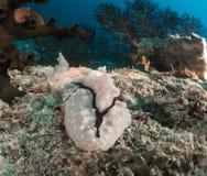 Nudibranch, σκόπελος και κοράλλι Μαλβίδες Στοκ εικόνες με δικαίωμα ελεύθερης χρήσης