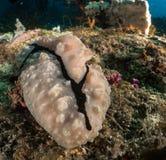 Nudibranch, σκόπελος και κοράλλι Μαλβίδες Στοκ Εικόνες