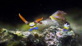 Nudibranch imagens de stock royalty free