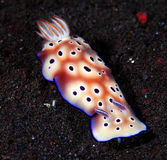 nudibranch Arkivbilder