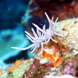 Nudibranch Imagenes de archivo