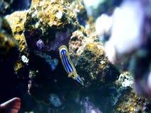 Nudibranch φιλμ μικρού μήκους