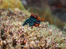 Nudibranch stock photos