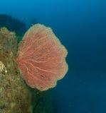 Nudibranch, scogliera e corallo Maldive Fotografie Stock Libere da Diritti