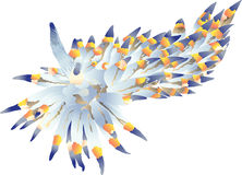 Nudibranch Vector Stock Photo