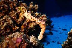 Nudibranchs photos libres de droits