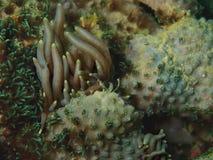 Nudibranchs, soort gelijkaardig een overzeese naaktslak, komt in vrijwel elke kleur en combinatie kleuren en is uiterst mooi royalty-vrije stock fotografie