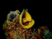 Nudibranchs, tipo como de uma lesma de mar, vem em virtualmente cada cor e combinação de cores e é extremamente bonito imagem de stock