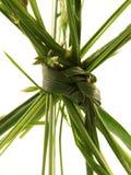Nudo de la hierba Imagen de archivo libre de regalías