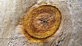 Nudo de madera foto de archivo libre de regalías