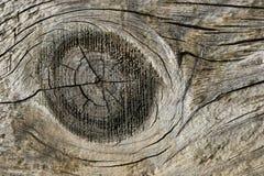 Nudo de madera imagen de archivo