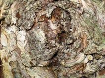 Nudo del árbol imagen de archivo libre de regalías