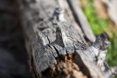 Nudo en el árbol fotos de archivo libres de regalías