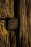 Nudo en la madera Imagen de archivo