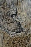 Nudo grande en madera envejecida imagen de archivo libre de regalías
