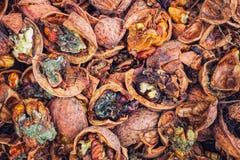 Nueces agrietadas infectadas con el molde Foto de archivo