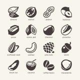 16 nueces - cet del icono del web Foto de archivo