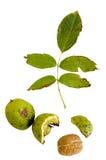 Nueces con la composición de las hojas Imagenes de archivo