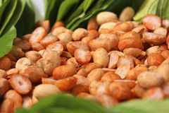 Nueces de betel en las hojas imágenes de archivo libres de regalías