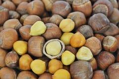 Nueces de Fisch del heterophylla del Corylus Imagen de archivo libre de regalías