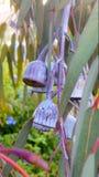 Nueces de la goma Foto de archivo libre de regalías