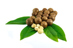 Nueces de macadamia foto de archivo