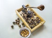 Nueces de macadamia con la galleta Imagenes de archivo