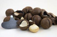 Nueces de macadamia y abrelatas de la nuez Imagen de archivo libre de regalías