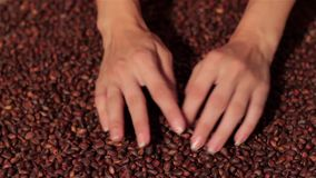 Nueces de pino que se derraman en la arpillera Cosecha derramar las manos almacen de video