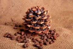 Nueces de pino siberianas Imagen de archivo libre de regalías
