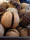 Nueces del árbol Foto de archivo libre de regalías