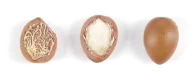 Nueces del Argan en fila en un fondo blanco. Imagen de archivo