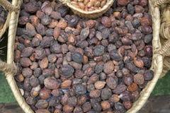 Nueces del Argan para la venta en Marruecos Imagenes de archivo