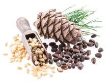 Nueces del cono y de pino de la nuez de pino en el fondo blanco Alimento biológico imagen de archivo