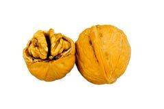 Nueces en shell Imagen de archivo libre de regalías