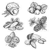 Nueces fijadas stock de ilustración